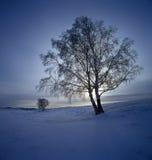 De sneeuw van Bashang Stock Foto