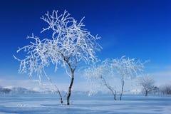 De sneeuw van Bashang Stock Fotografie