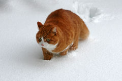 De sneeuw van de akte Royalty-vrije Stock Fotografie