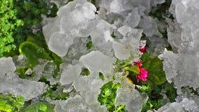 De Sneeuw van de de lentedooi het Smelten stock video