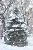 De sneeuw van de de winterspar Stock Foto