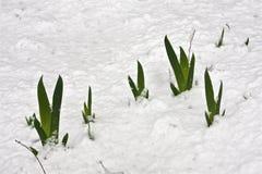De Sneeuw van de lente Stock Afbeelding