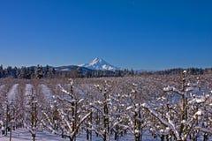 De Sneeuw van de vallei Royalty-vrije Stock Foto's
