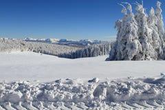 De sneeuw van de winter Stock Afbeelding