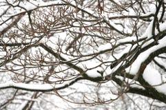 De sneeuw van de winter op boomtakken Stock Afbeelding