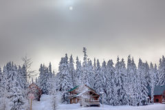 De Sneeuw van de zonmist behandelde de Pas Washington van Evergreens Snoqualme stock afbeeldingen