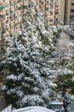 De sneeuw van Shanghai Royalty-vrije Stock Fotografie