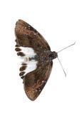 De sneeuw vlakke vlinder van het water Stock Foto
