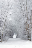 De sneeuw vorst behandelde boom gevulde steeg in land Stock Foto's