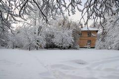 De sneeuw winter Royalty-vrije Stock Afbeeldingen