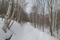 De sneeuw winterse weg van de aard bosvoet door berkbos - dwarsland die, wandelend, de vette recreatie van de bandfiets ski?en -  stock afbeelding