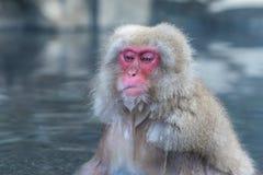 De sneeuwaap of Japanse Macaque in de hete lente onsen Stock Fotografie