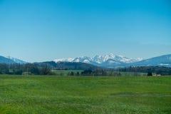 De sneeuwbergen van Alpen achter een groene weide stock afbeeldingen