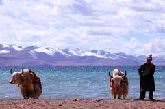 De sneeuwbergen van Tibet Stock Afbeeldingen
