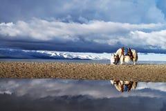 De sneeuwbergen van Tibet Stock Foto