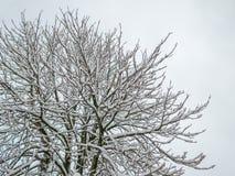 De sneeuwblizzard van de wintertijdboom het koude bevriezen Stock Foto