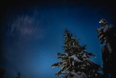 De sneeuwdalingen van de boom Sneeuw zoals sterren Royalty-vrije Stock Foto's