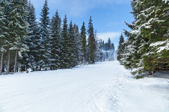 De sneeuwkanonnen die van de skitoevlucht in de sneeuw en van bomeninii winter h lopen Royalty-vrije Stock Fotografie