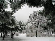 De sneeuwlandschap van de winter stock fotografie