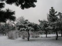 De sneeuwlandschap van de winter royalty-vrije stock foto