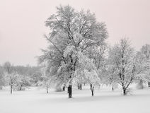 De sneeuwonweer van Michigan van het Sprookjesland van de winter Stock Foto