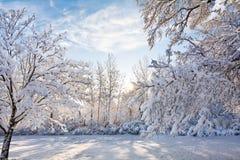 De sneeuwscène van de de Winterzonsopgang Stock Foto