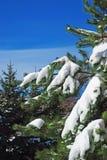 De sneeuwtakken van de winter van boom op een blauwe hemelachtergrond Stock Fotografie
