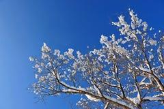 De sneeuwtakken van de winter van boom op een blauwe hemelachtergrond Royalty-vrije Stock Afbeeldingen