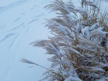 De sneeuwwinter Stock Foto