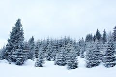 De sneeuwwinter Stock Afbeelding