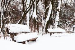De sneeuwwinter in een park Royalty-vrije Stock Foto