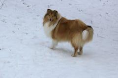 De sneeuwwinter en rode hond Stock Fotografie