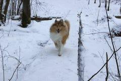 De sneeuwwinter en rode hond Stock Foto's