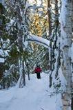 De sneeuwwinter in Lapland Finland, sneeuw coveres alle thetrees en takken stock afbeeldingen