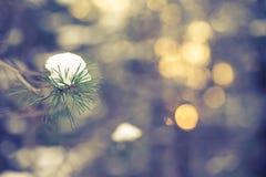 De sneeuwwinter op de achtergrond van pijnboom bosblured gestemd Stock Afbeelding