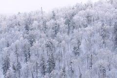 De Sneeuwwitjeboom, Hokkaido, Japan Royalty-vrije Stock Afbeelding