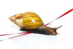 De snelle slak kruist de afwerkingsband op een witte achtergrond Stock Afbeeldingen
