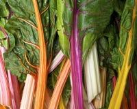 De snijbiet van de regenboog Royalty-vrije Stock Foto