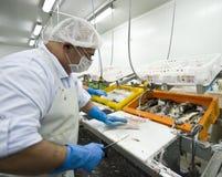 De snijder van vissen in actie stock afbeelding