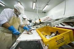 De snijder van vissen in actie royalty-vrije stock afbeelding