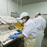 De snijders van vissen stock foto