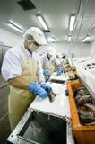De snijders van vissen in actie royalty-vrije stock foto's