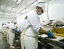 De snijders van vissen op het werk stock foto