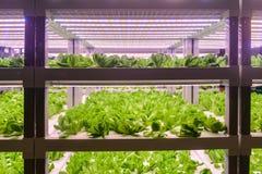 De snijsla groeit met Geleide Lichte Binnenlandbouwbedrijflandbouw royalty-vrije stock foto's