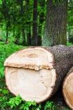 De snittpäls-träd journalerna, slut upp Royaltyfri Fotografi