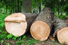 De snittpäls-träd journalerna, slut upp Fotografering för Bildbyråer