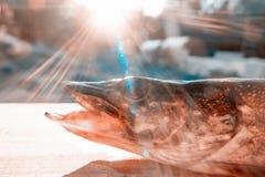 De snoek ligt op een houten lijst in het zonlicht Close-uphoofd Concept visserij royalty-vrije stock afbeelding