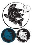 De snoekbaarzen van vissen Royalty-vrije Stock Foto