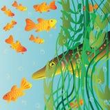 De snoekenjachten op kleine vissen. Stock Afbeelding