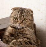 Het oog van katten Royalty-vrije Stock Foto